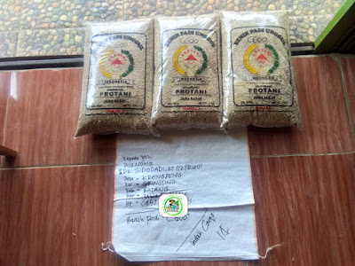 Benih Padi Pesanan    PURNOMO Batang, Jateng.    Benih Sebelum di Packing.