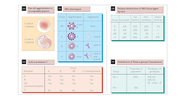Blood Groups And Transfusions, The ABO system, Inheritance of ABO blood groups, Rh groups, Haemolytic disease of the newborn, Complications of blood transfusions, Blood storage
