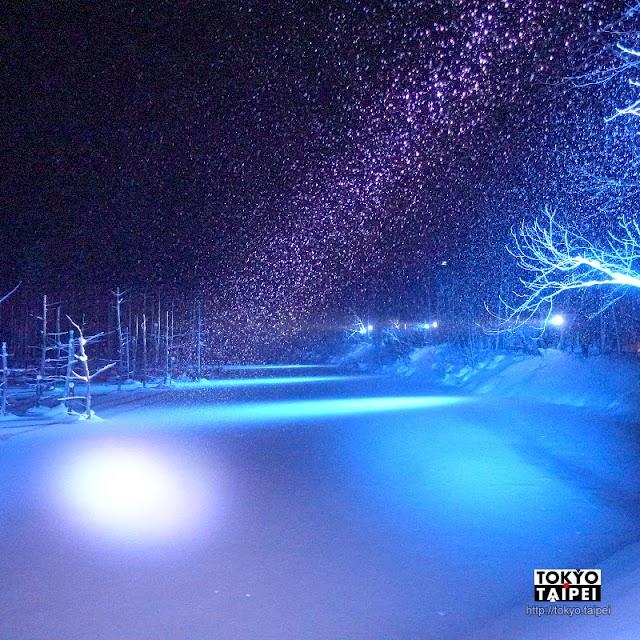【旭山動物園+青池點燈一日遊】雪地看企鵝散步 晚上欣賞湛藍夢幻青池點燈