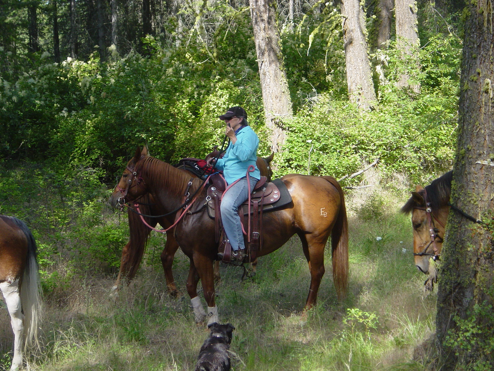Love, Hope, Trust: Horse Camp
