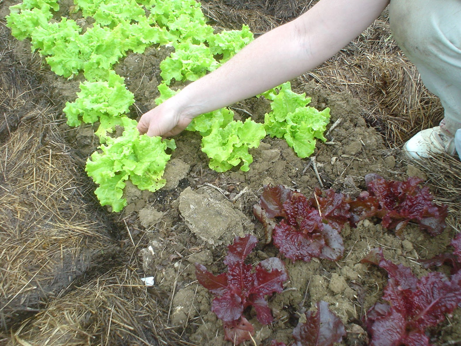 Tilling Leaves Garden Soil