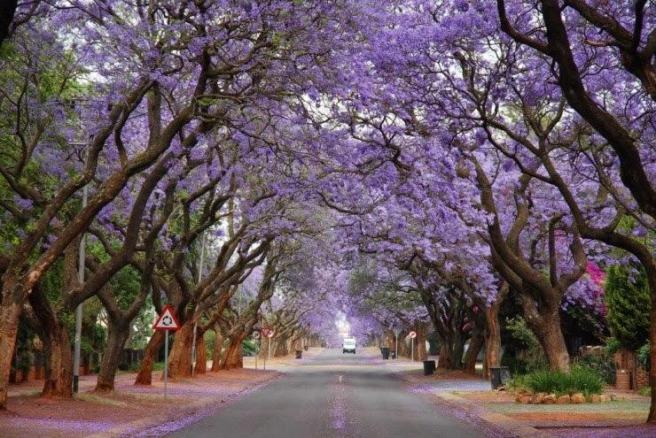 Top 10 Blooming Cities In Spring