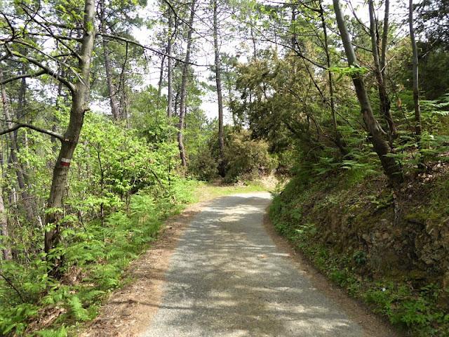 sentiero sterrato nel bosco tra san venerio e il termo di arcola