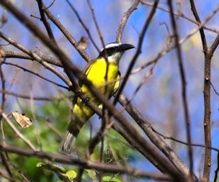 birdwatching in Nicaragua