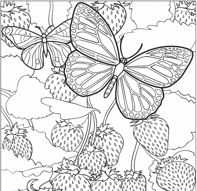 EXPOSE HOMELESSNESS: BUTTERFLIES AND STRAWBERRIES