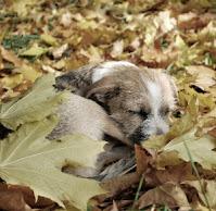 catelus dormind intre frunze