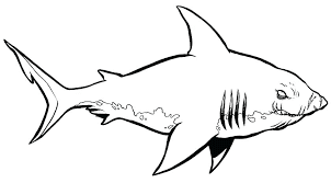 Best Of Megalodon Shark Coloring Pages Animals Images