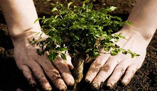 Integran 10 mil hectáreas de bosque nuevas en Edomex