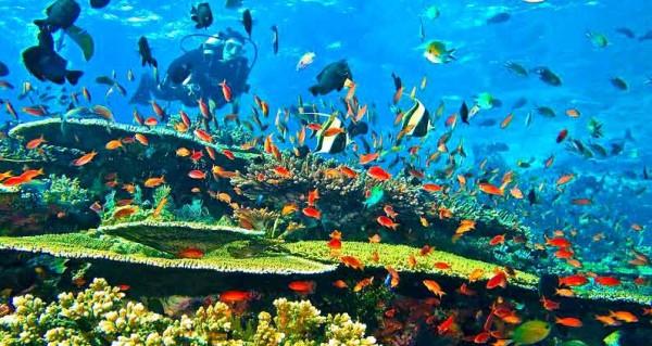 Diving dan snorkel, kegiatan wisata Pulau Komodo yang diminati