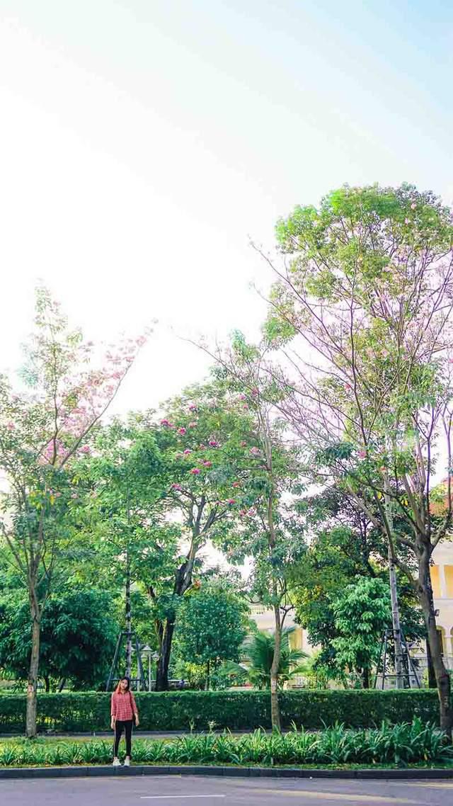 Có một Sài Gòn mộng mơ mùa hoa kèn hồng nở rộ - Ảnh 11