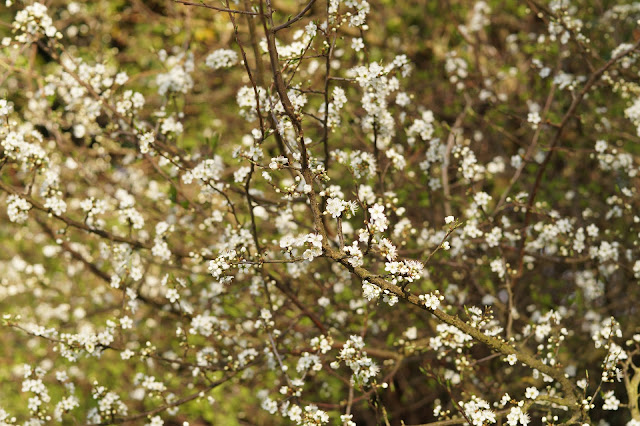 Norfolk countryside in spring photographs