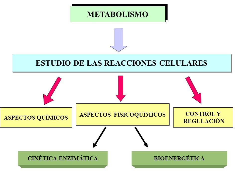TEMA 2 - METABOLISMO Y BIOENERGETICA