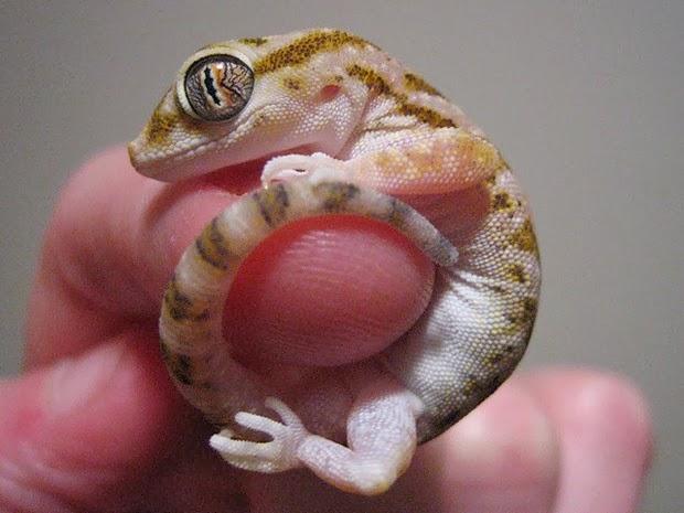 tinny animals on fingers7