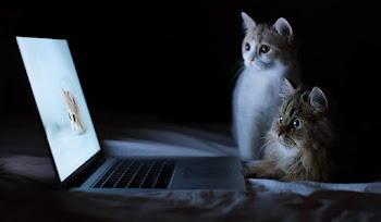 Windows 10 için Özel Olarak Seçilmiş Kedi Resimleri