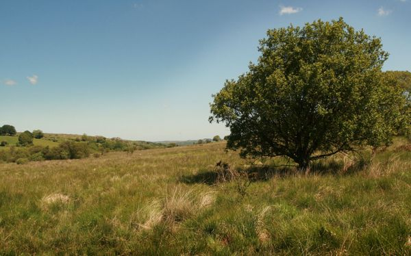 Dartmoor mire at DWT Emsworthy Mire nature reserve, near  Widecombe. Photo copyright Simon Williams (All rights reserved)