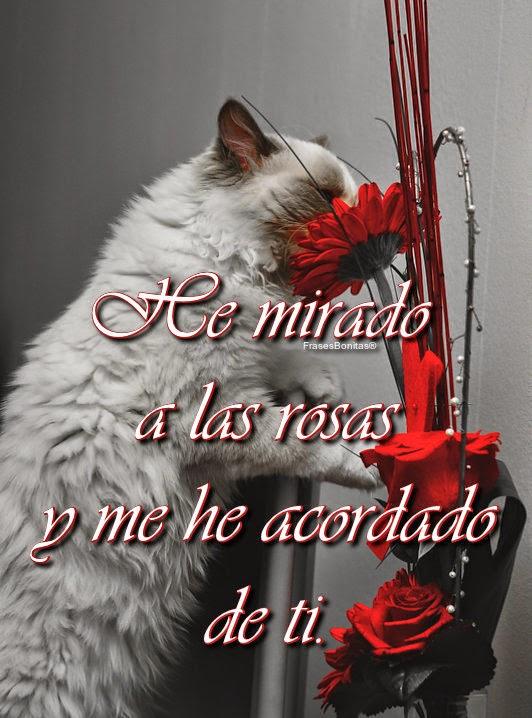 He mirado a las rosas y me he acordado de ti.  -Juan Ramón Jiménez