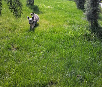 Parktaki Keyfi Yerinde Köpek