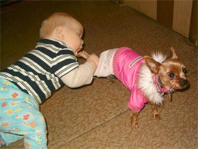 Bebé mordiendole la pata a un perro