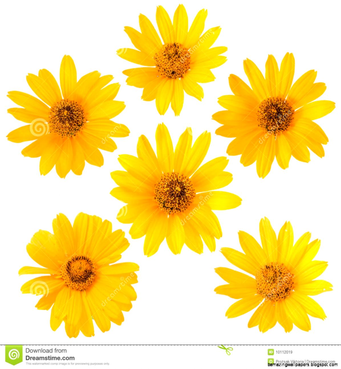 White And Yellow Flower Background Amazing Wallpapers