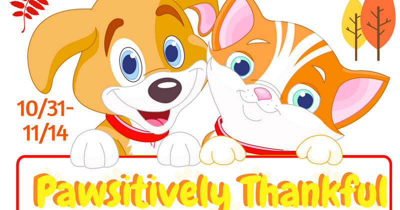 has anyone won an amazon giveaway confessions of a frugal mind pawsitively thankful 3773