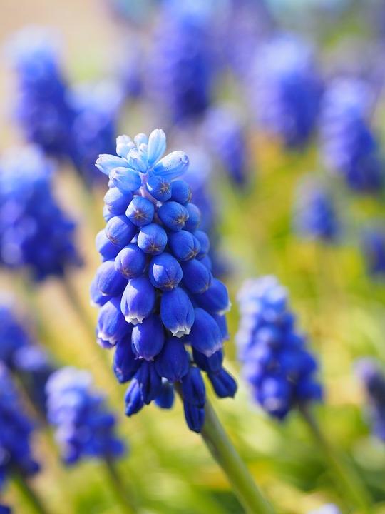 Gardenology: Blue Flowers