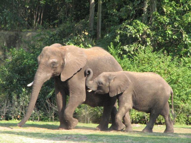 List of Extinct Mammals in the Philippines