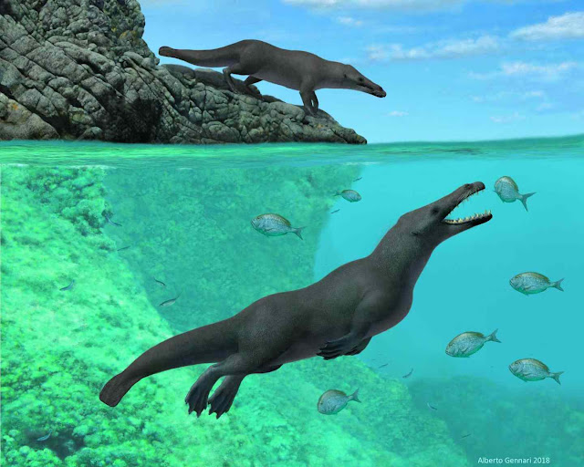 Four-legged Whale With Hooves Fossil Discovered