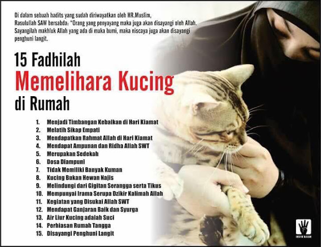 15 Kelebihan Memelihara Kucing Di Rumah, Cats, My Cats, Kucing Kesayangan,