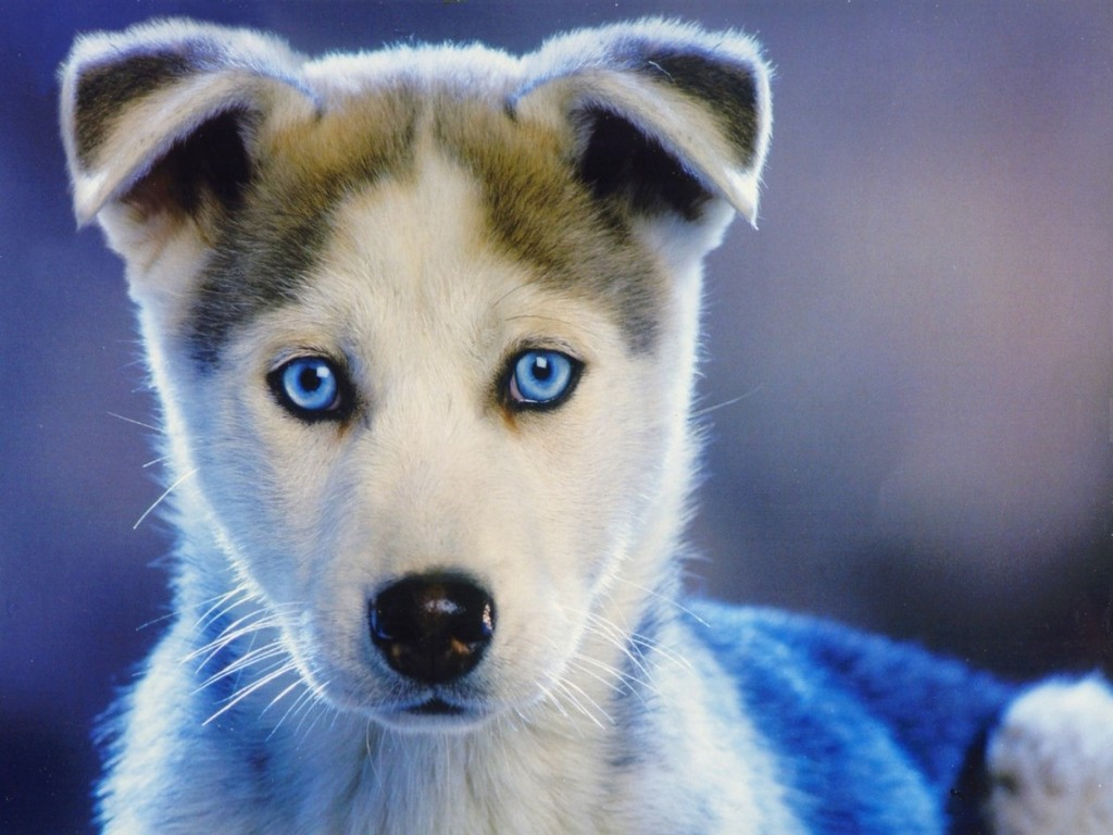 HD Wallpapers: HD PUPPY WALLPAPERS
