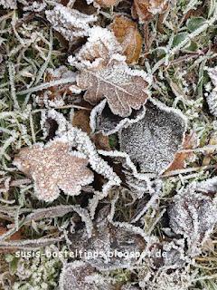 Frostige Blätter, Foto von Unabhängiger Stampin' Up! Demonstratorin Susanne McDonald