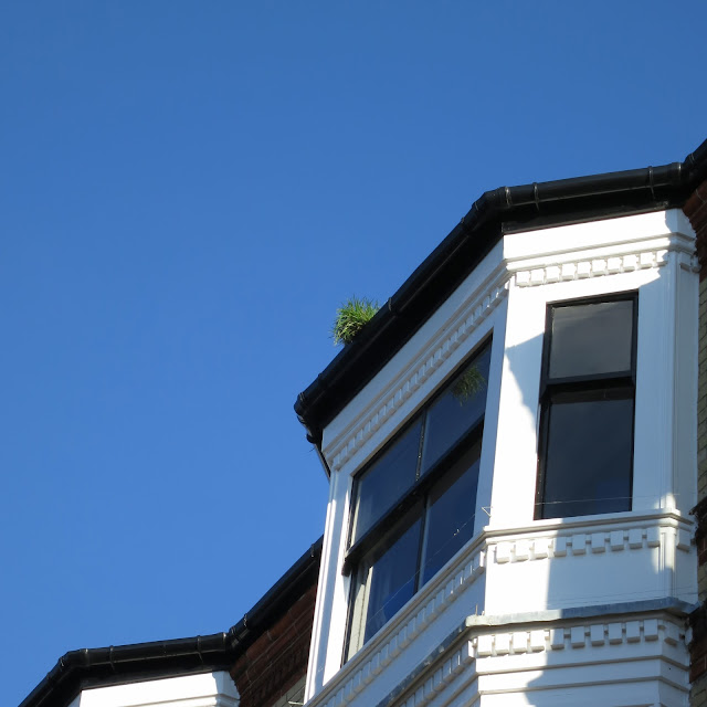 Small but sturdy clump of grass grows on top of building.