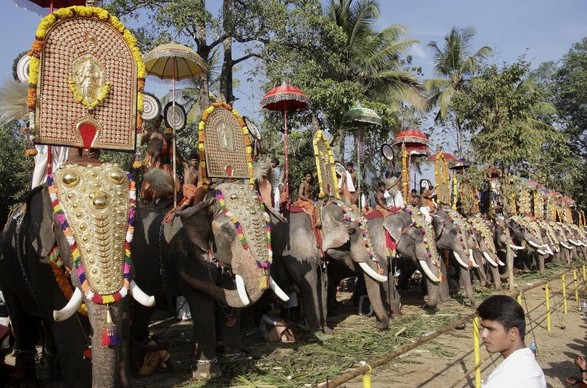 éléphants festival pooram kerala