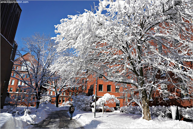 Universidad de Harvard después de la Tormenta Skylar