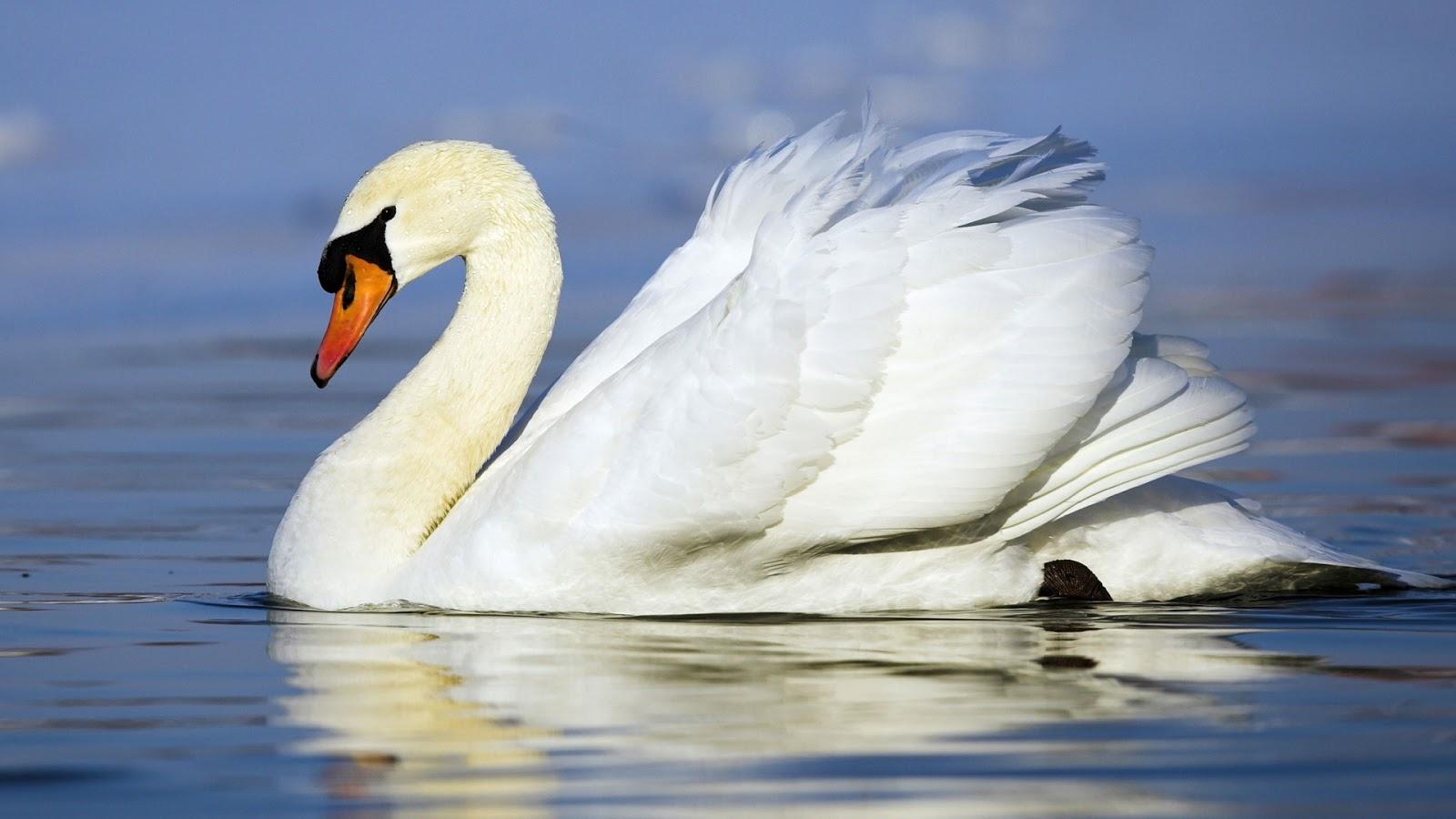 Hd Animal Wallpapers High Resolution Animals Download: Animal Hd Wallpapers,high Resolution Pics Of Animal Pics