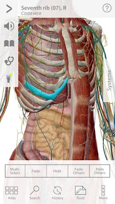 human anatomy atlas sc 1