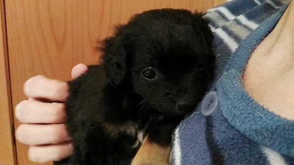cachorro tamaño pequeño 2