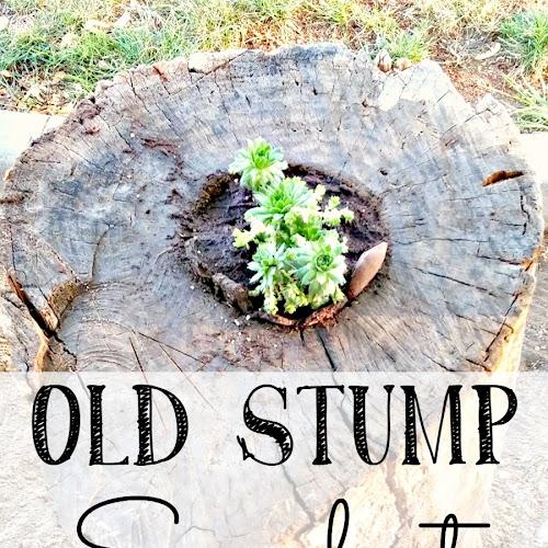 Old Stump Succulent Planter - Weekend Yard Work Series