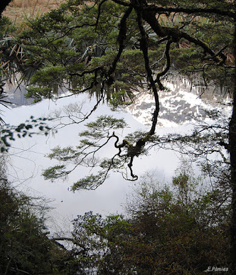 Reflejos en el agua en Mirror Lake (Nueva Zelanda)
