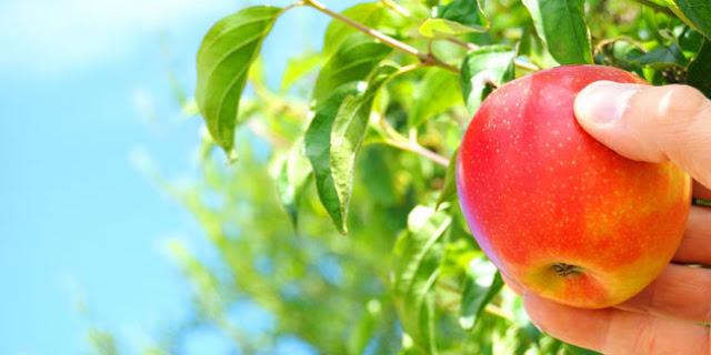 Kebijaksanaan Pohon Apel