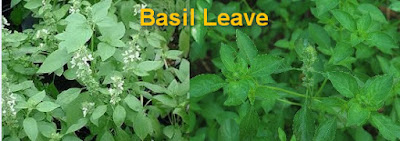 Basil advantages for wellbeing