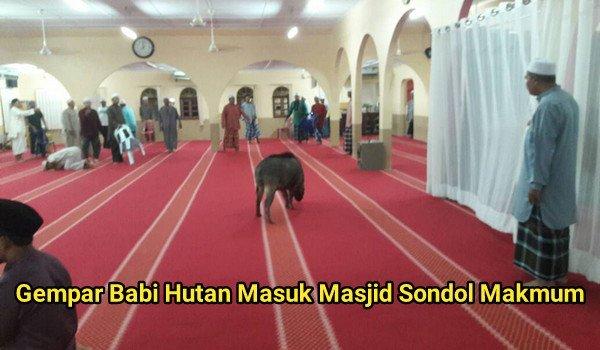 Gempar Babi Hutan Masuk Masjid Sondol Makmum