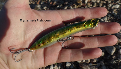 DUO Realis Pencil Popper Dorado