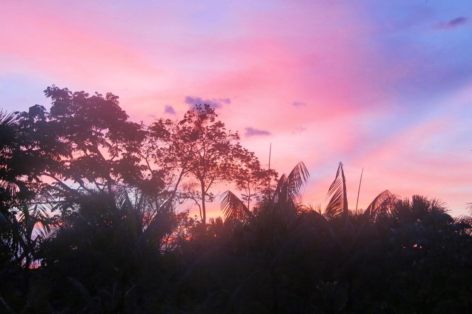 Floresta Amazônica, na chegada à Presidente Figueiredo