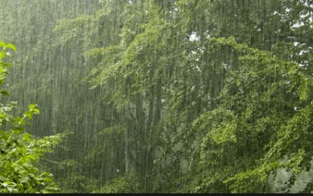 Manfaat Air Hujan bagi Kehidupan Manusia