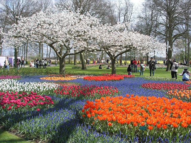 Green Pear Diaries, turismo, viajes, parques, Parque Keukenhof, Holanda