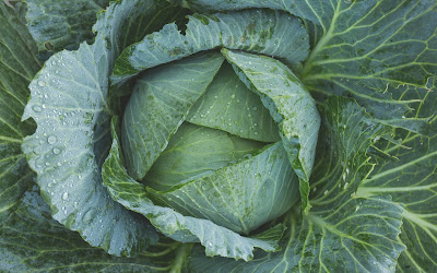 green cabbage widescreen resolution hd wallpaper