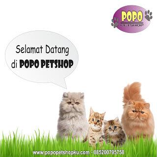 selamat datang di Popo Petshop