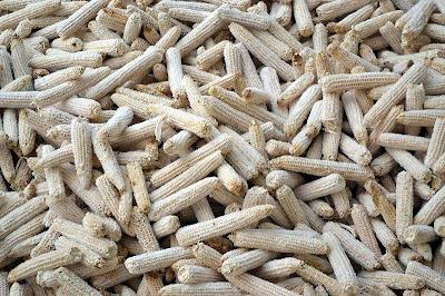 zuros-mazorca-maiz