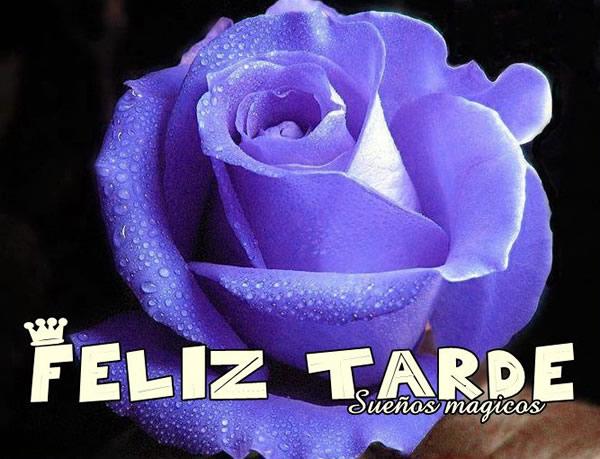 rosa azul Feliz Tarde