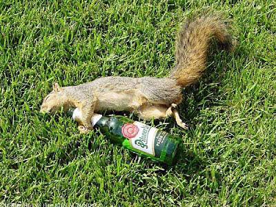 Witziges Eichhörnchen Pilsner Urquell Bier lustig